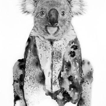"""Annika Wessmark """"Koala"""""""