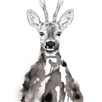 """Annika Wessmark """"Roe deer"""""""