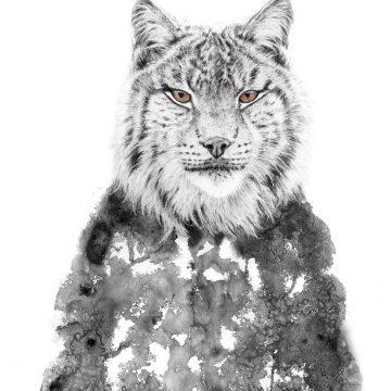 """Annika Wessmark """"Lynx"""""""